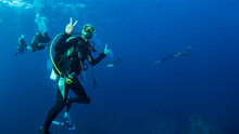 Scuba Divers Diving With Manta...