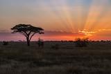 Fototapeta Sawanna - Tanzania sunset