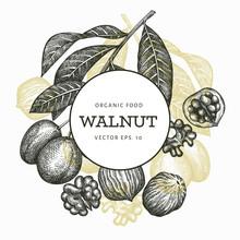 Hand Drawn Sketch Walnut Design Template. Organic Food Vector Illustration. Vintage Nut Illustration. Engraved Style Botanical Background.