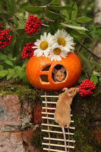 Happy Love Couple Of Cute Mice. Pumpkin House For Halloween Party In Blossoming Garden With Camomiles. Holiday Decor. New Year Symbol 2020: Rat, Mouse. Fairy Tale Postcard With Animal. Fun Pet. Lovers