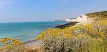 Seaside, White Cliffs Landscap...