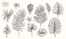 Collection Of Tropical Plants,...