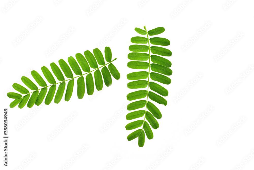 Fototapeta fern leaf isolated on white