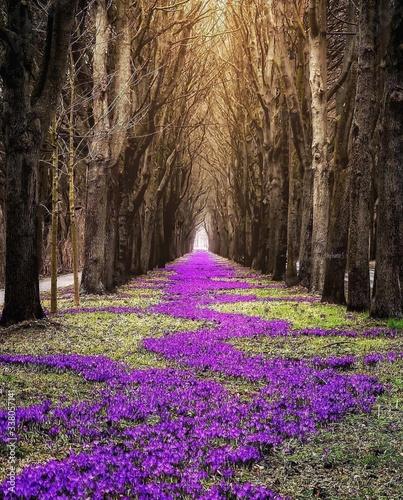 purple-flowering-trees-in-forest