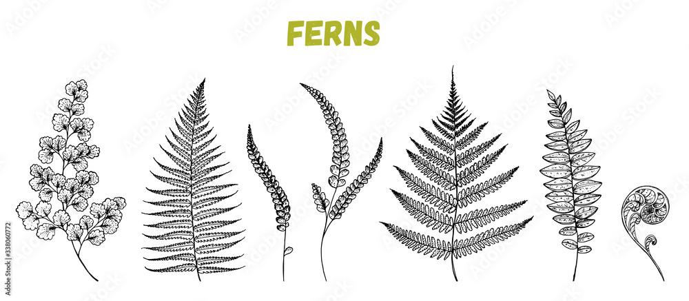 Fototapeta Fern sprigs sketch collection. Hand drawn illustration. Tropical set. Vector illustration. Design template.