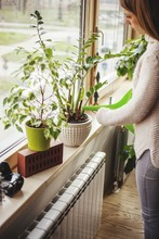 Woman Watering Potted Plants On Window Sill At Home