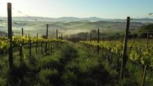Tuscany Foggy Landscape. Misty...