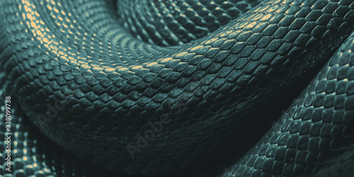 Snake skin texture. Snake close-up. Background surface Canvas