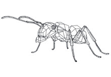 Vector Illustration Of A Geometric Polygonal Ant. Abstract Linear Insect.