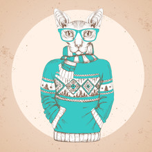 Retro Hipster Fashion Animal Sphynx Cat Dressed Up In Pullover.