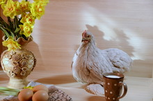 On The Table Sits A Lively Cute Gray Chicken, There Is A Vase With Yellow Fragrant Flowers Of Daffodils, A Cup With Milk, Eggs.