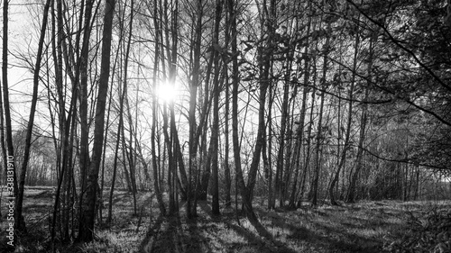 las brzozowy - 338131910