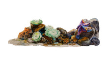 Watercolor Sea Anemones, Urchins And Sea Star In A Reef Colorful Underwater Landscape Background. Original Illustration Isolated On White Background