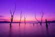 Leinwanddruck Bild - Silhouette Bare Trees In Sea Against Sky During Sunset