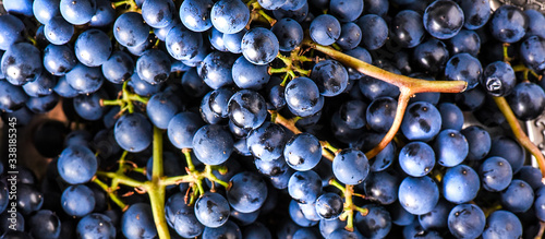 Tablou Canvas Organic blue grapes background, concept wine,