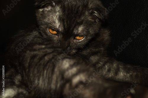 Close-up Portrait Of Cat Relaxing At Home - fototapety na wymiar