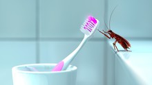 Close-up Of Insect On Pink Toothbrush