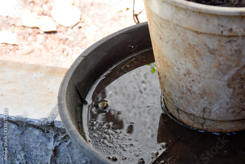 plastic bowl abandoned in a vase with stagnant water inside Slika na platnu