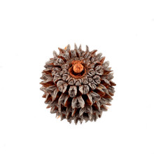 Abstract Spiky Seed Pod