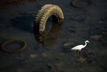 Bird In Garbage Water