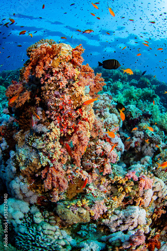 Fototapety, obrazy: coral reef