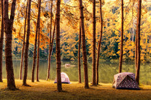 Tents And Trees On Lakeshore During Autumn