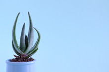 Cactus In A Pot On An Isolated Background. Minimalism, Horizontal Image.