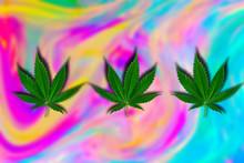 Green Cannabis Leaf On A Blurr...