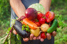 A Man In The Garden With Vegetables In His Hands. Selective Focus.