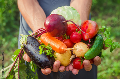 A man in the garden with vegetables in his hands Poster Mural XXL