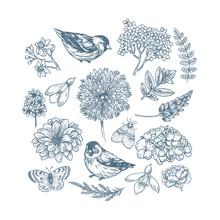 Spring Floral Collection. Design Vector Kit. Birds, Flowers, Butterflies. Botanical Vintage Illustration. Vector Illustration