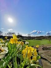 Springtime In Avenham And Mill...