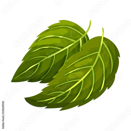 Obraz na plátně Dark Green Mint Leaves with Serrated Margins Vector Illustration