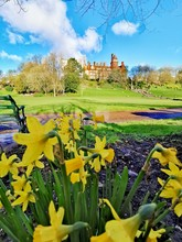 Spring Landscape With Daffodil...
