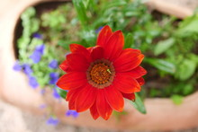A Beautiful Red Flower In The Garden