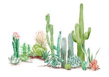 Watercolor Illustration Of Some Desert Plants