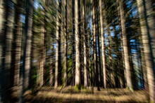 Zooming Photo Of A View Into The Forest, Early Morning