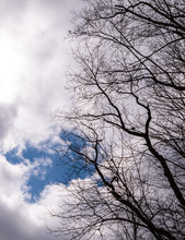Bare Trees Under A Patch Of Blue Sky And Darkening White Clouds In Deerfield Township, Pennsylvania, USA
