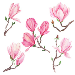 Watercolor set of illustration of magnolia flowers, for wedding cards, romantic prints, fabrics, textiles and scrapbooking.