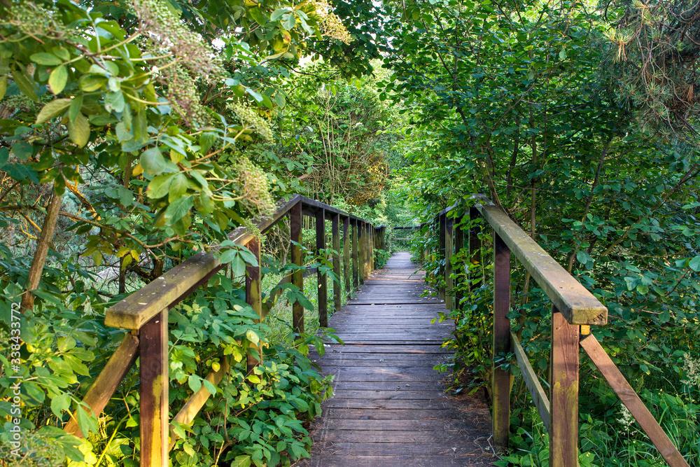 Fototapeta Tajemniczy mostek w wielkim lesie.