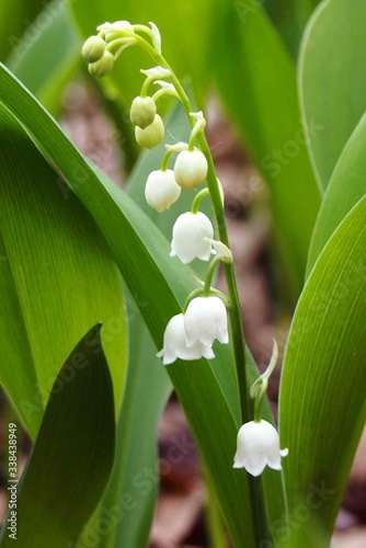 Fototapety, obrazy: Close-up Of White Flowering Plant