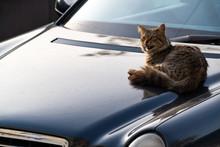 Stray Homeless Cat Resting On...