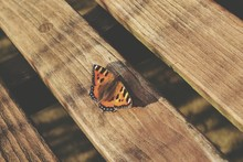 Butterfly Siting On Wooden Bench