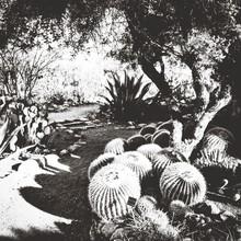 Golden Barrel Cactus In Park
