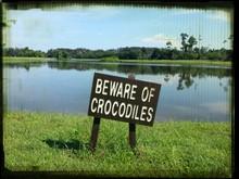 Crocodile Warning Sign At Lakeshore