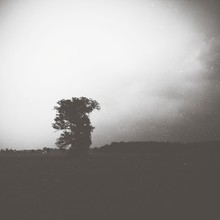 View Of Silhouette Lone Tree On Landscape