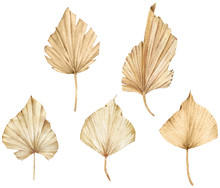 Tropical Set Of Watercolor Golden Dried Fan Palm Leaves. Exotic Beige Clipart.