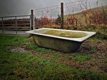 Bathtub Used As Water Trough At Farm