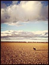 Dog On Field Against Cloudy Sky