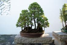 Japanese Tea Garden - Redwood ...
